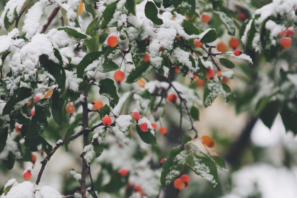 A wintery garden scene